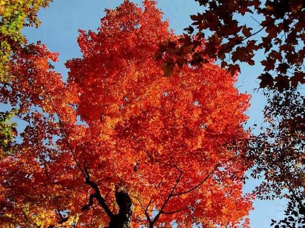 纽约州秋季红叶
