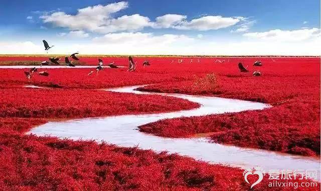 紅海灘中國盤錦